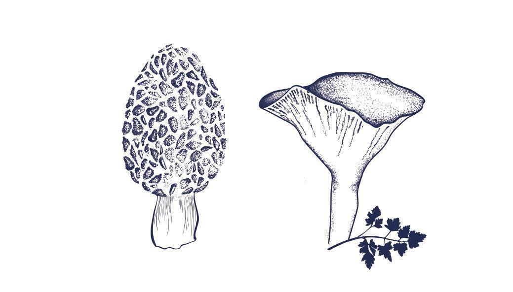 illustration rennes